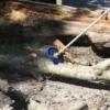 Sägeblatt Cobra am Baumstamm