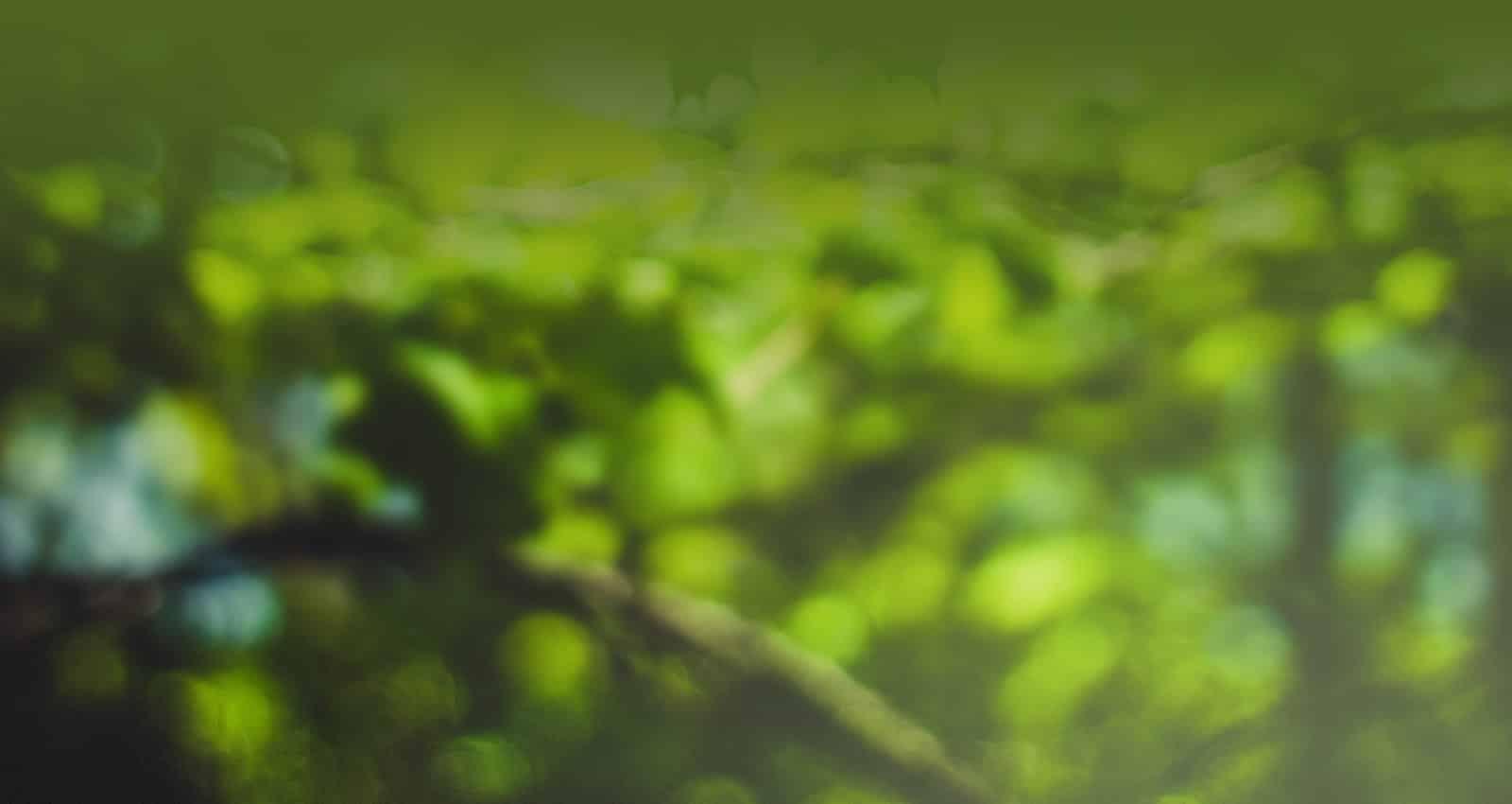 Best-Neuheiten - Gartenzubehör für Pofis
